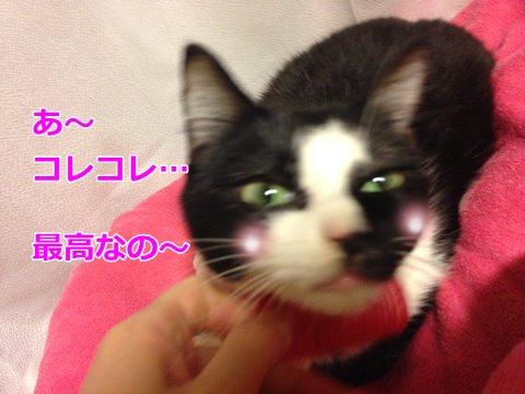 猫 ブラッシング2