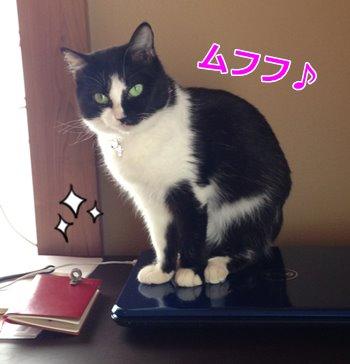 猫はやっぱり、高みを目指す?