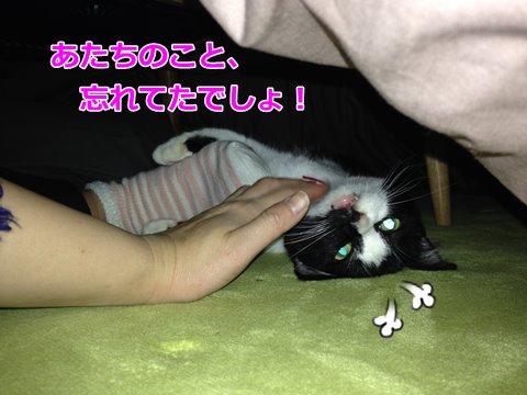 猫 こたつ4