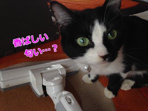 猫は掃除機を怖がる?好き?