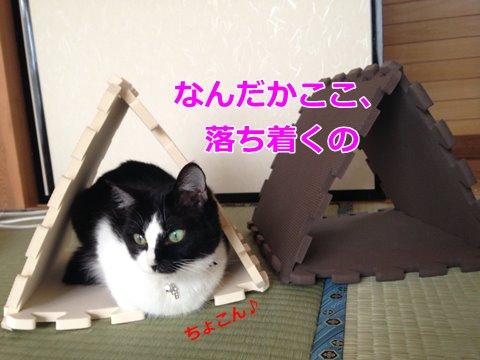 猫 箱入り