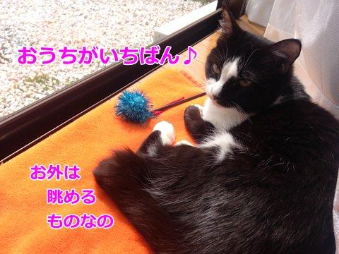 猫ムスビ、玄関からの脱走防止対策!