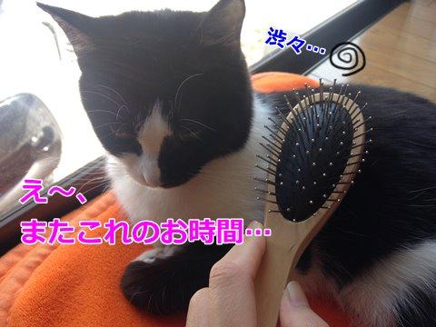 ブラッシング嫌いな猫を攻略せよ!
