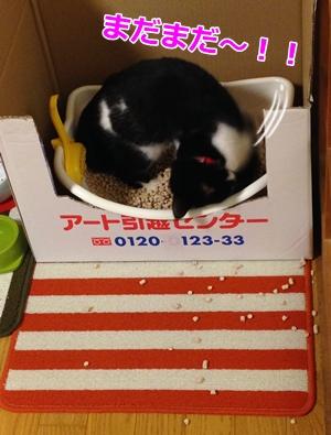 猫 トイレ砂かけ
