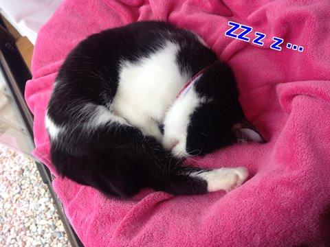 猫は目を開けて寝る?