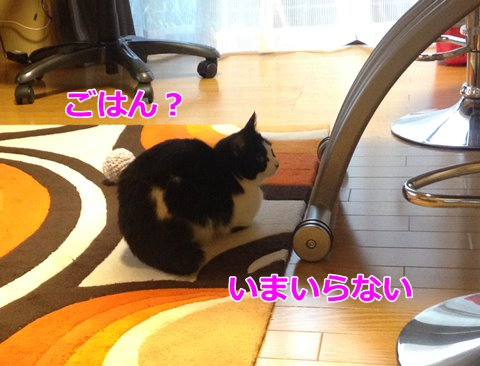 ごはんを食べない猫さまを、その気にさせたい!