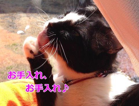 猫 毛づくろい