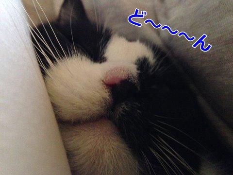 ムー・シャワー 猫のくしゃみ、鼻水、涙にご用心!