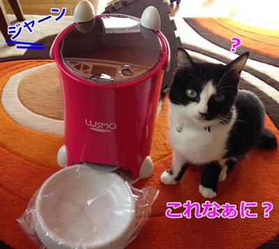 自動給餌機ルスモ&猫
