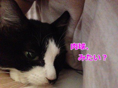 猫ムスビ、肉球の色は・・・?