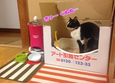 便秘猫 トイレ