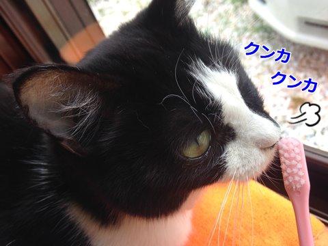 猫 歯ブラシ