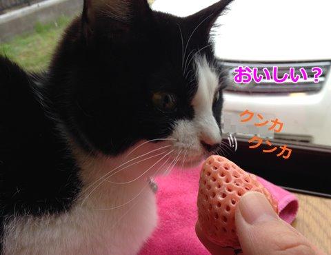 猫といちご