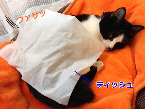 猫 ティッシュ