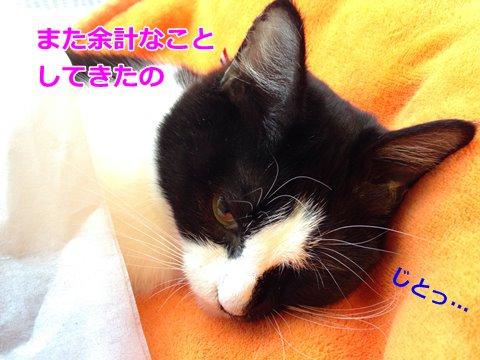 猫 ティッシュ2