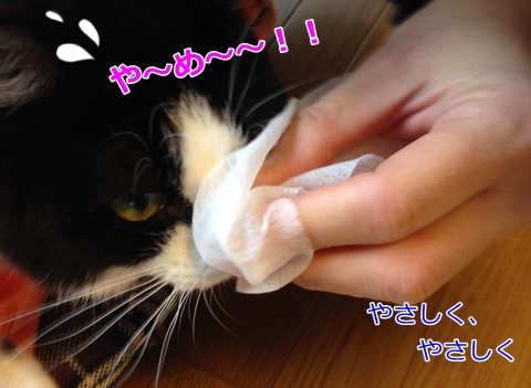 猫あご黒いニキビ