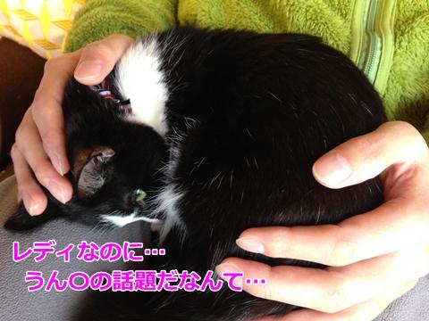 鳴きながらトイレをする、便秘猫ムスビ