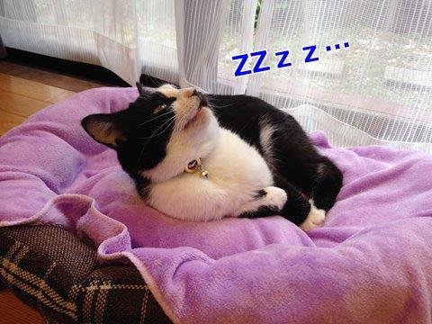 猫は目を開けて寝る