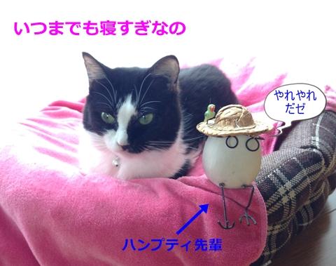 猫とたまご