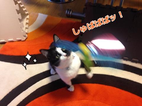 猫ムスビ、一押しのおもちゃは…