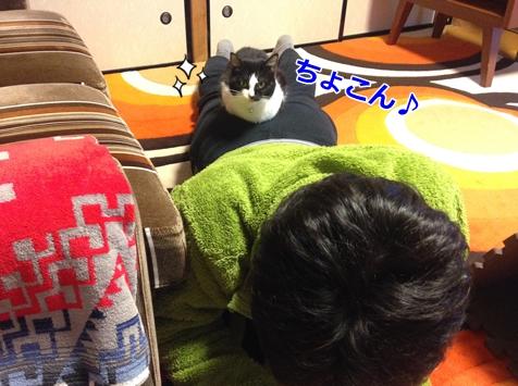 乗っかる猫