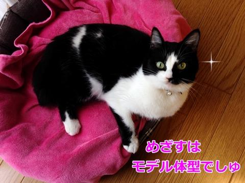 フェイスローラーで小顔になりたい猫ムスビ