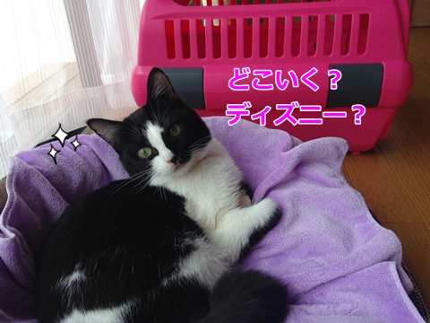 猫ムスビ、うちの子1か月記念
