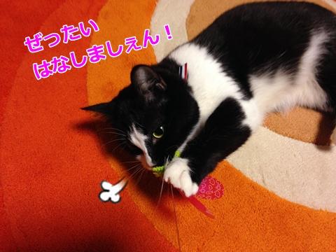 猫おもちゃオススメ