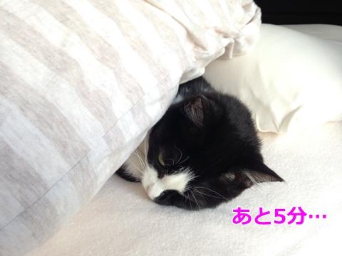 寝坊する猫
