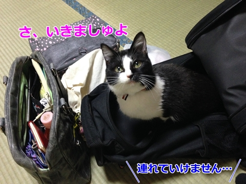 猫と旅行カバン