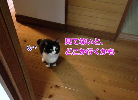 猫ムスビ、お留守番がんばったね!