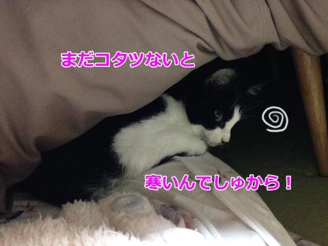 猫とこたつ
