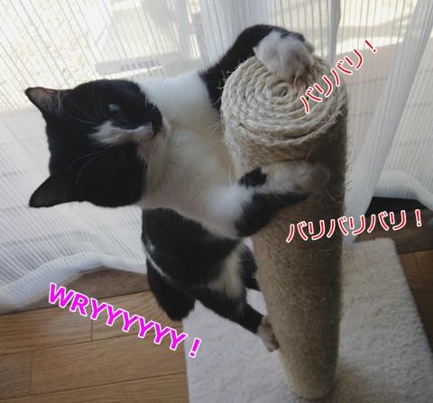 猫つめとぎポール