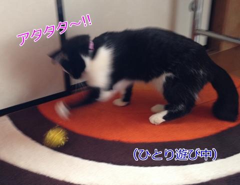 猫ひとり遊び