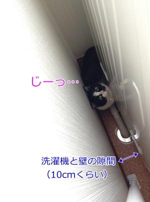 猫洗濯機の隙間