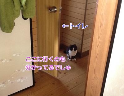 猫トイレ待ち伏せ
