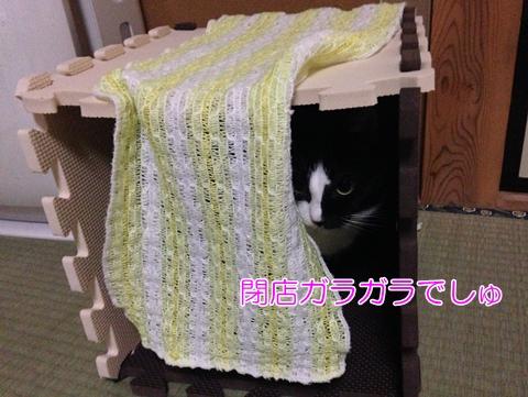 猫閉店ガラガラ