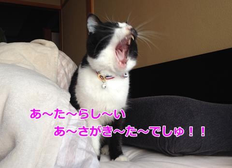 猫おたけび