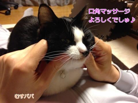 猫 顔マッサージ