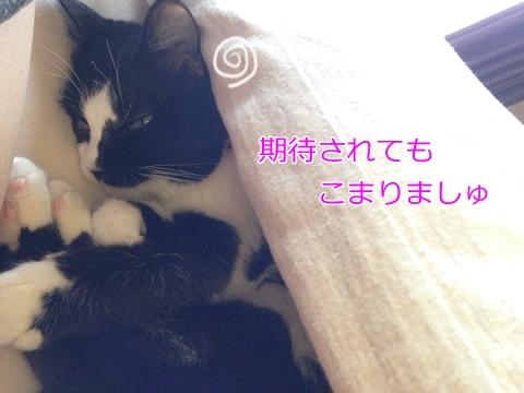猫ベッドの中