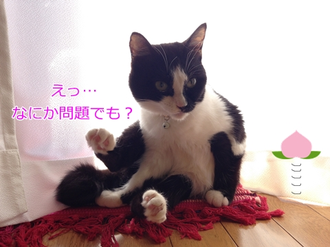 猫ムスビ、恥じらいを忘れる