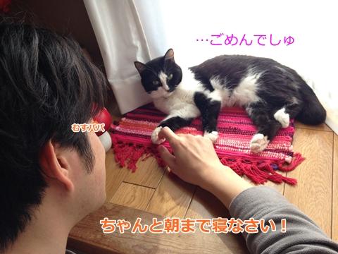怒られる猫