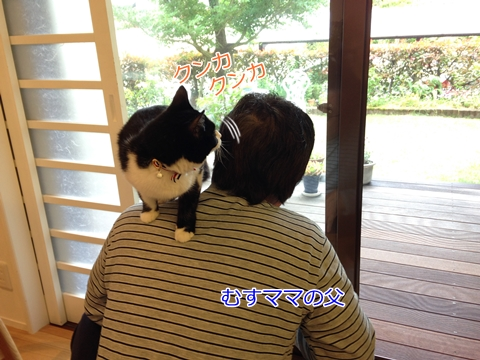 猫肩に乗る