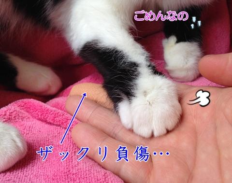 猫の爪で負傷
