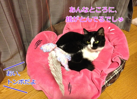 猫手作りおもちゃトンボ