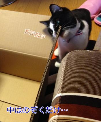 猫箱に入らない