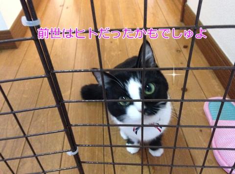 猫玄関で待つ