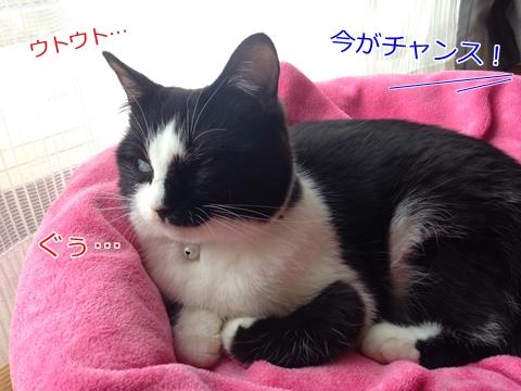 猫の寝込み
