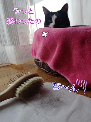 猫の換毛期ブラッシング