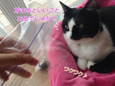 猫ブラッシング毛玉ボール
